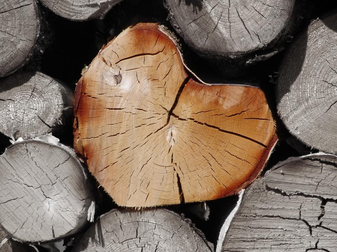 heart of wood