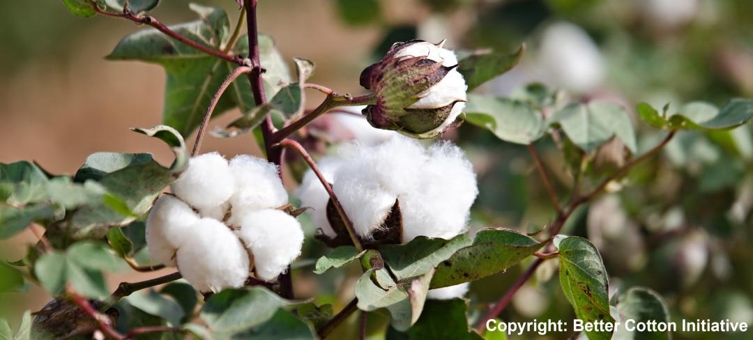 Copyright: Better Cotton Initiative