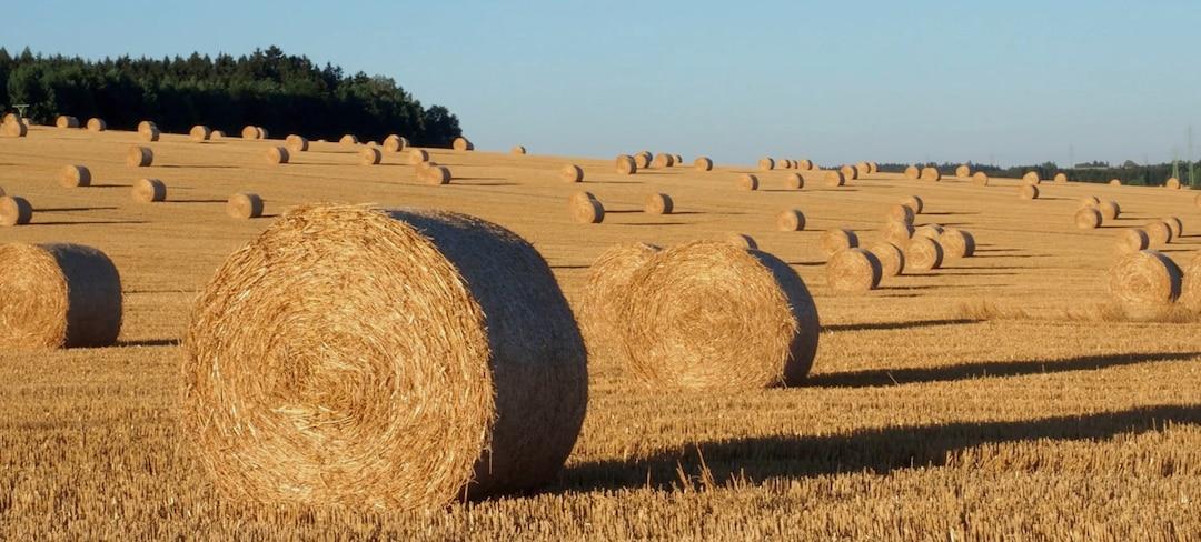 Wheat-field-2880x1300.jpg