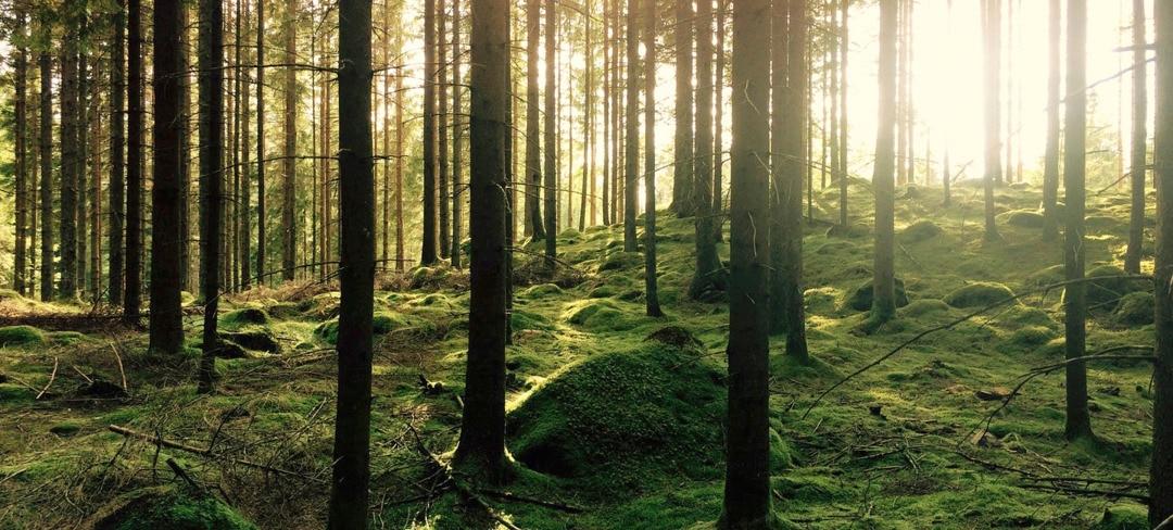 Forest-2880x1300.jpg